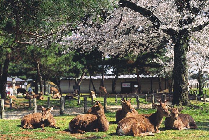 긴테츠 레일패스로 오사카, 나라, 교토를 자유롭게 여행하세요!