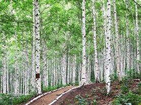 인제 자작나무 숲+외옹치바다향기로+속초중앙시장 | 당일여행 | 리무진탑승